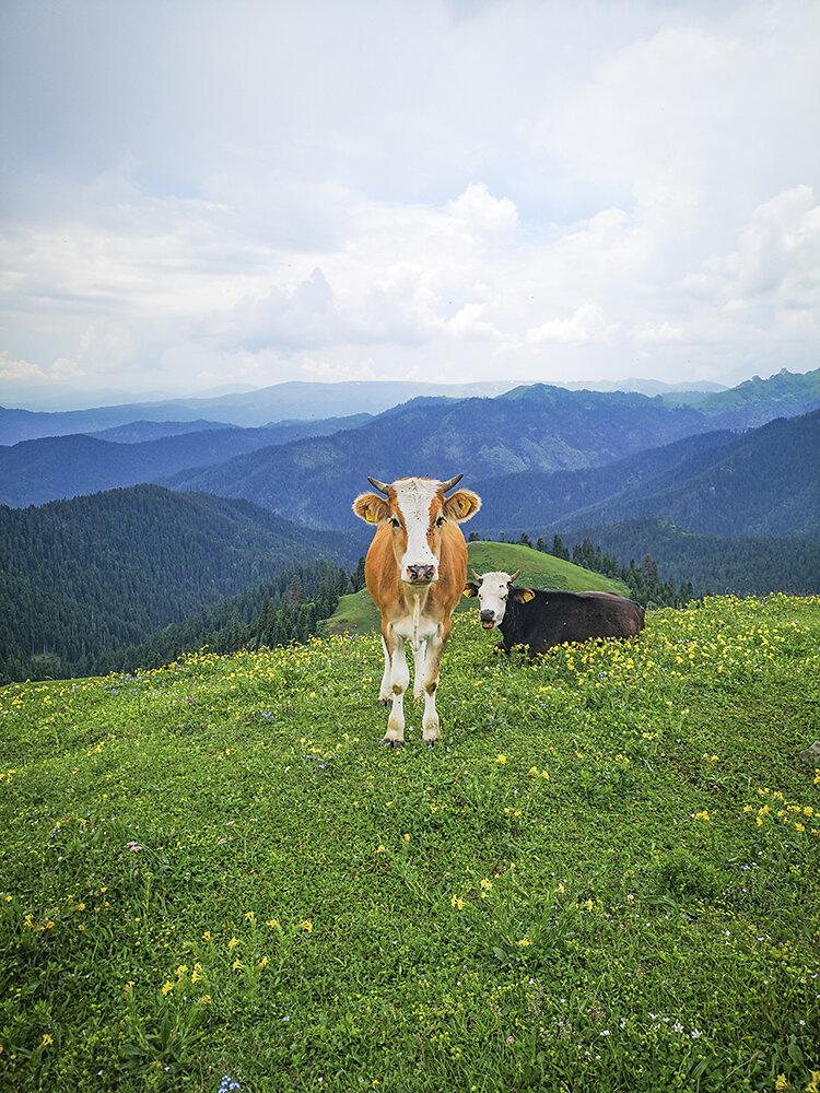 Kaukasus-Georgien.jpg
